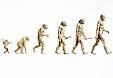 Evolution - The Misguided Theory